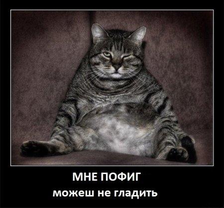 Кошачье-собачьи демотиваторы.