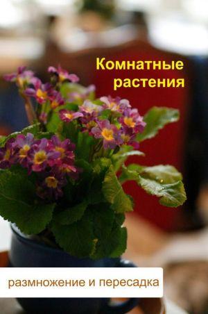 Комнатные растения, размножение и пересадка