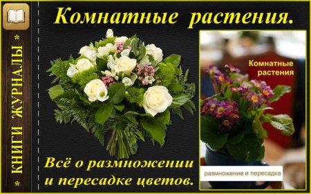 Размножение и пересадка цветов