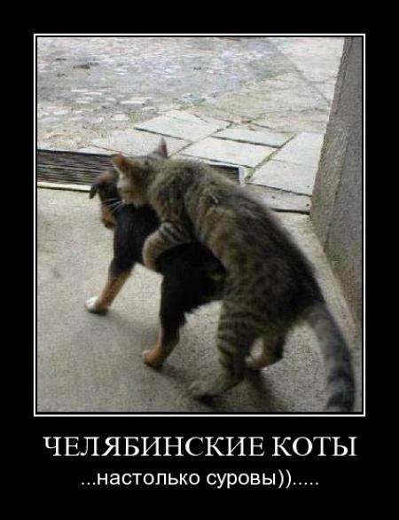 Челябинские коты очень суровые